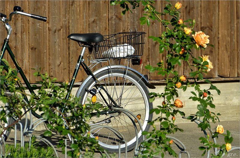 Rad mit Rosen