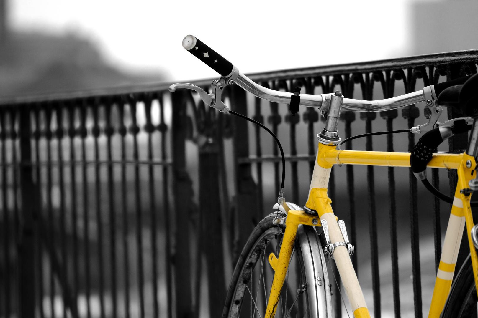 Rad und Zaun