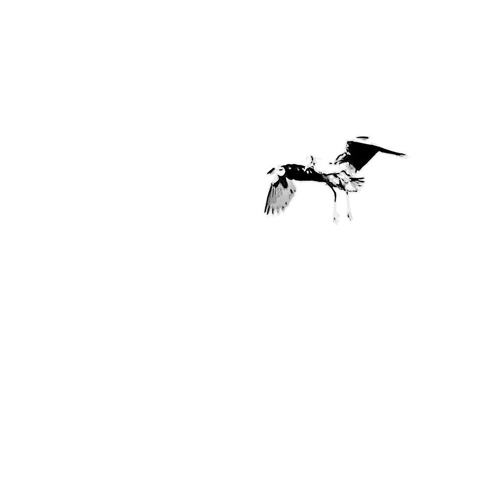 Radikal minimalistischer Ansatz in der Vogelfotografie 2