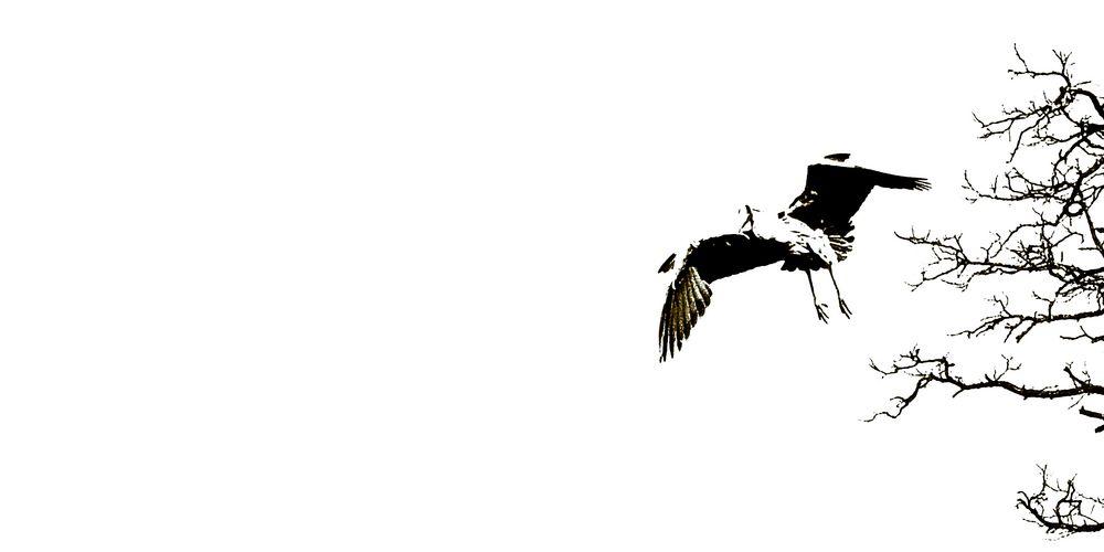 Radikal minimalistischer Ansatz in der Vogelfotografie 3