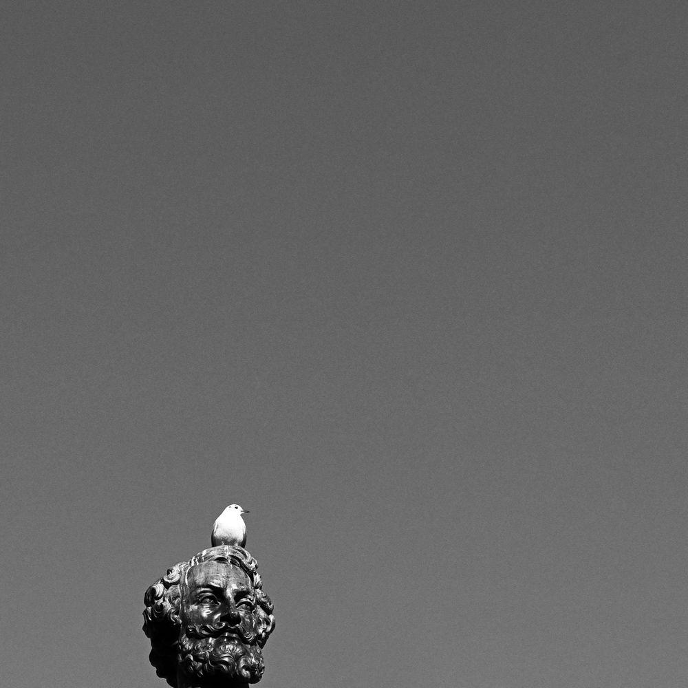 Radikal minimalistischer Ansatz in der Vogelfotografie