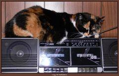 Radiokatze