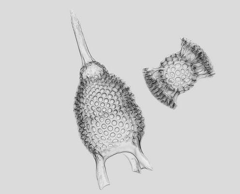 Radiolaria - Strahlentierchen