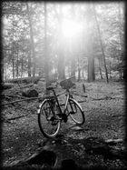 Radtour durch den Wald