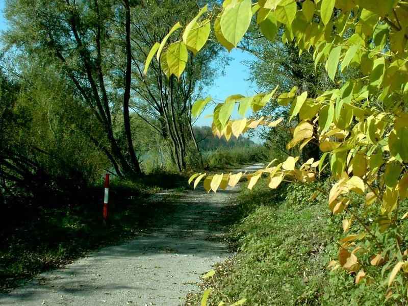 Radweg entlang der Salzach, nähe Oberndorf