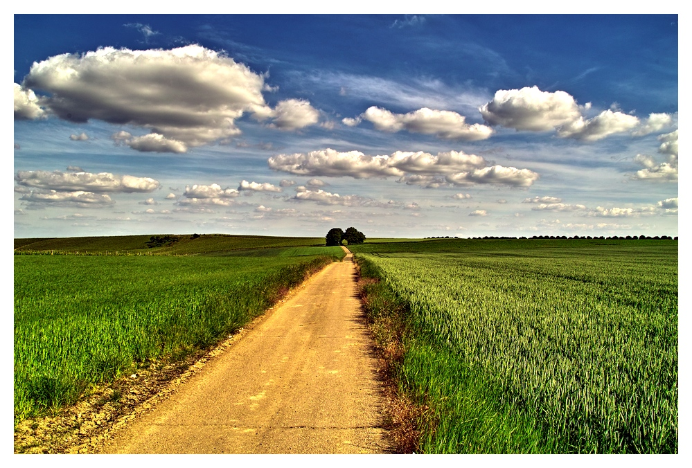 Radweg nach Alzey in vivid color
