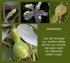 Rätsel-Lösung - verblühte Kalebassenblüte