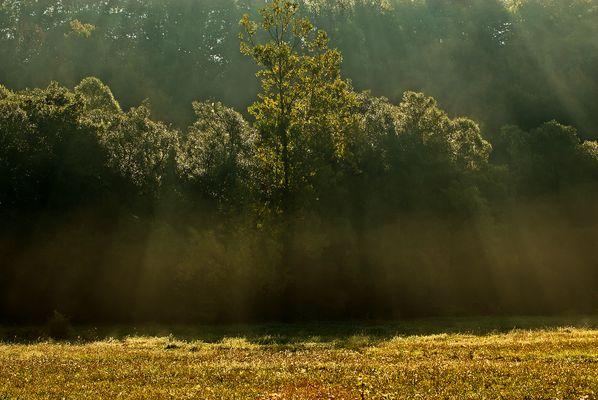 Raggi di luce sul bosco
