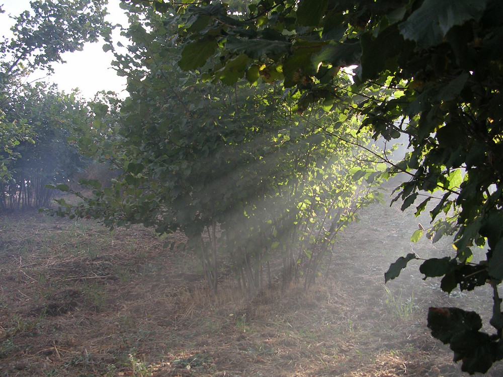 Raggi di sole tra gli alberi