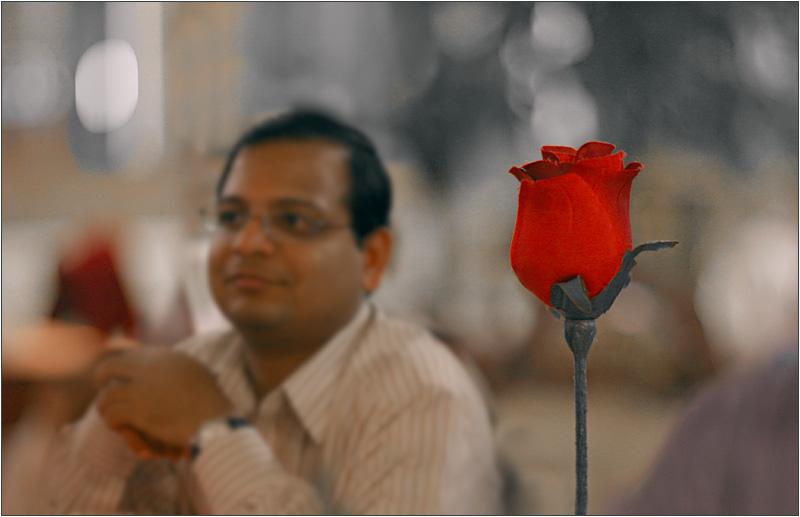 Raghu's Rose