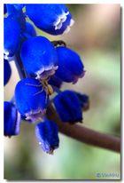 .: ragnetto nel blu :.