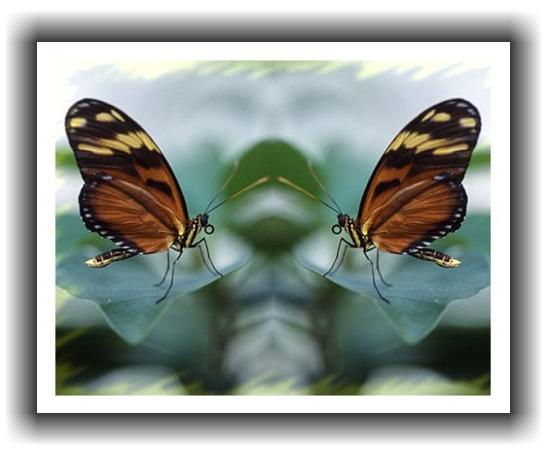 Rahmenprojekt: Schmetterlinge
