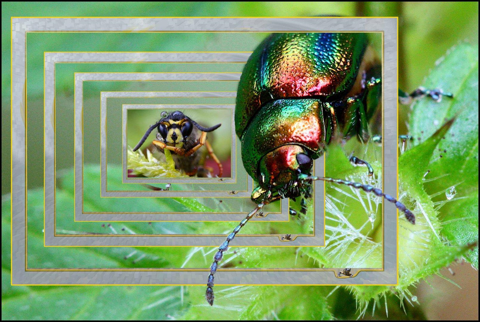 Wunderbar Pictionary Rahmen Spiel Galerie - Benutzerdefinierte ...
