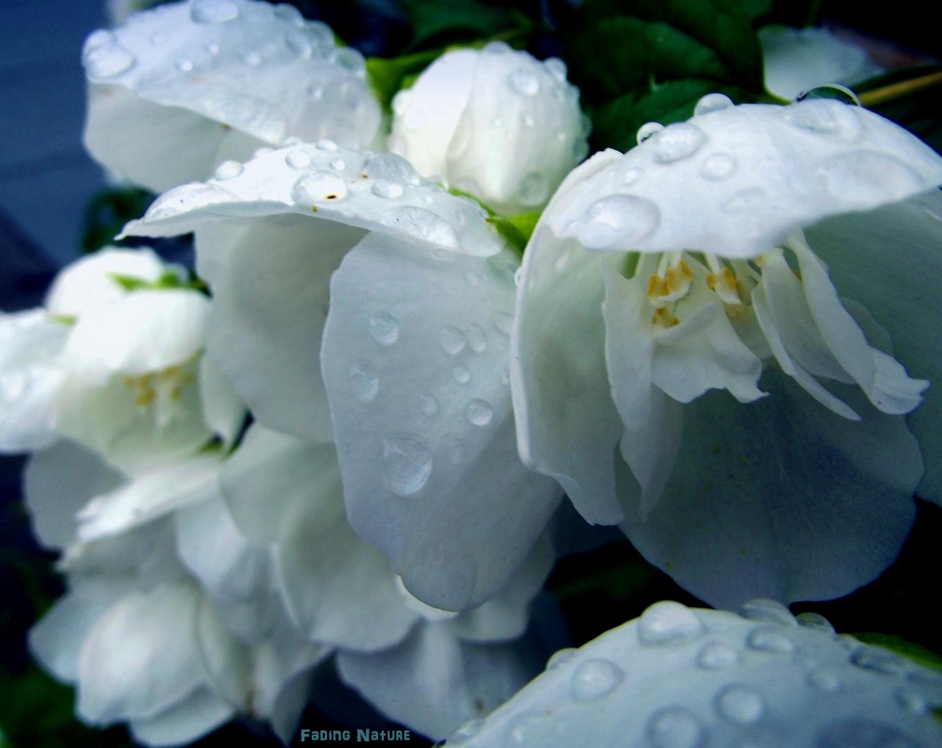 - rain -