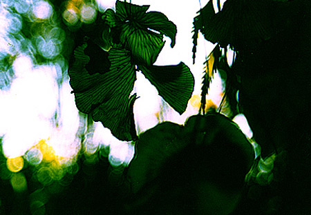 rain forest, Punakaiki, New Zealand