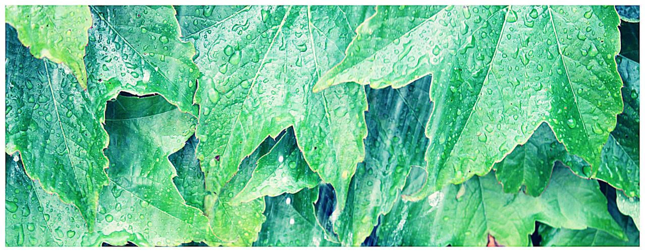 rain on leafes