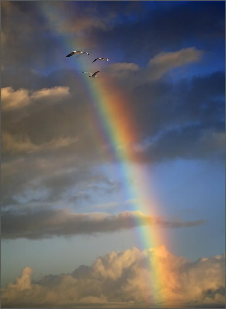 ---Rainbow---