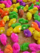 Rainbow chicks