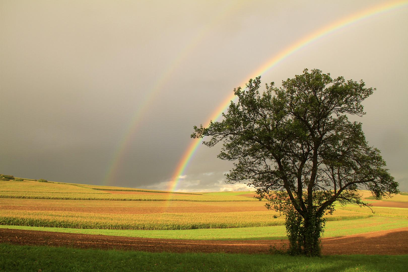 Rainbow Nr. 2