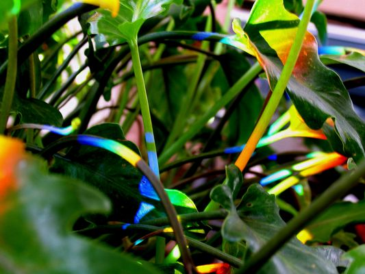 Rainbow on my Plant