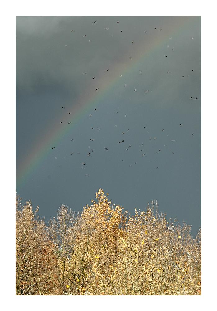 **Rainbow Warrior**