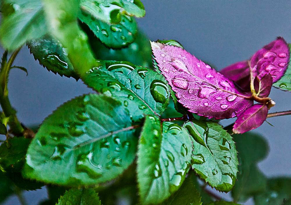 raindrops (# 2)