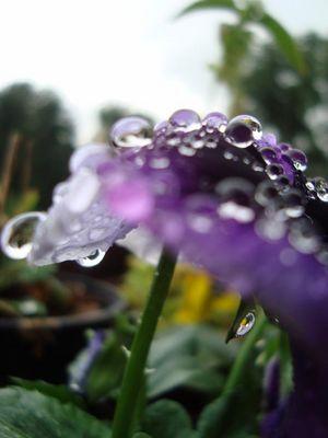 ~ raindrops ~