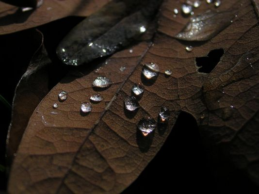 Raindrops on Autumn Leaf I