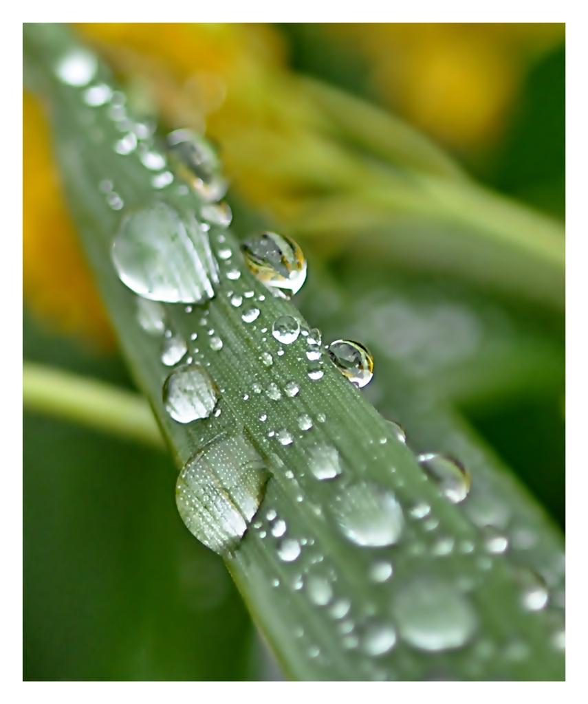 raindropspirit II