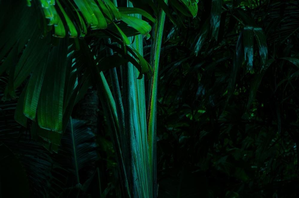 rainforest 6