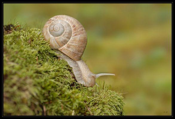 ralentir,....langsamer,....!