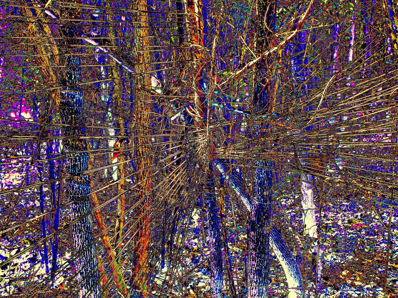 Ramas coaxiales en el bosque otoñal