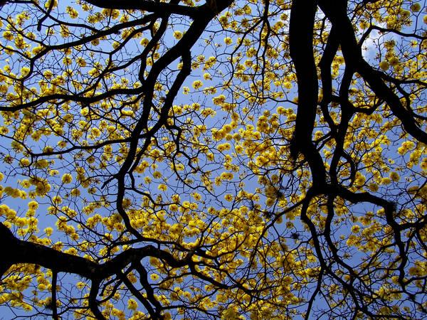 Ramas, Flores, Cielo