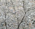 Ramas nevadas de Mallorca