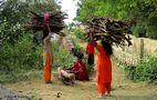 Ramasseuses de bois en Inde von quinze14