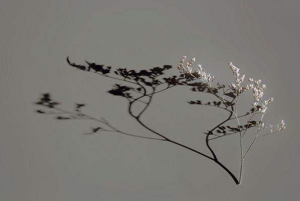"""""""Ramita""""      Para el proyecto minimalismo, de Goyo"""