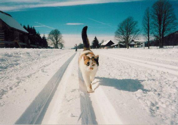 Ramsauer Katze