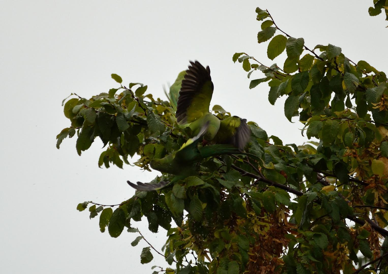 Randale im Baum gegenüber ..........