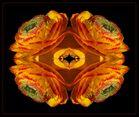 Ranunkel-Kaleidoskop
