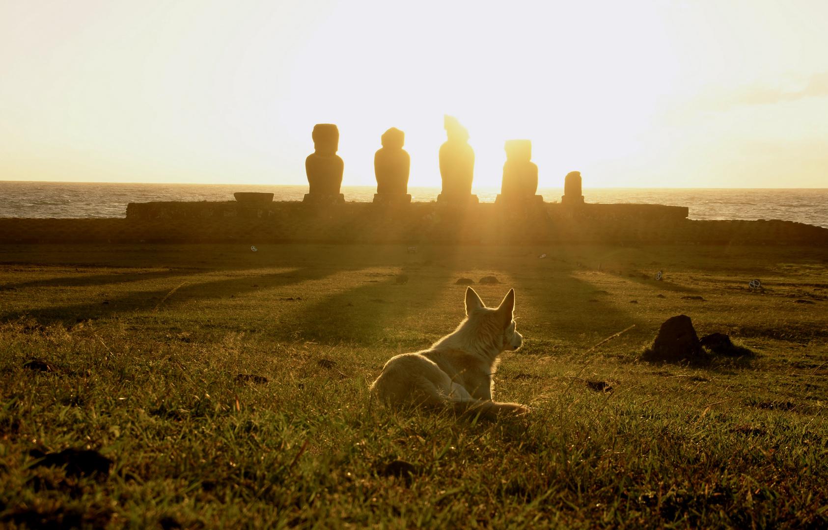 Rapa Nui Dog and the Moai