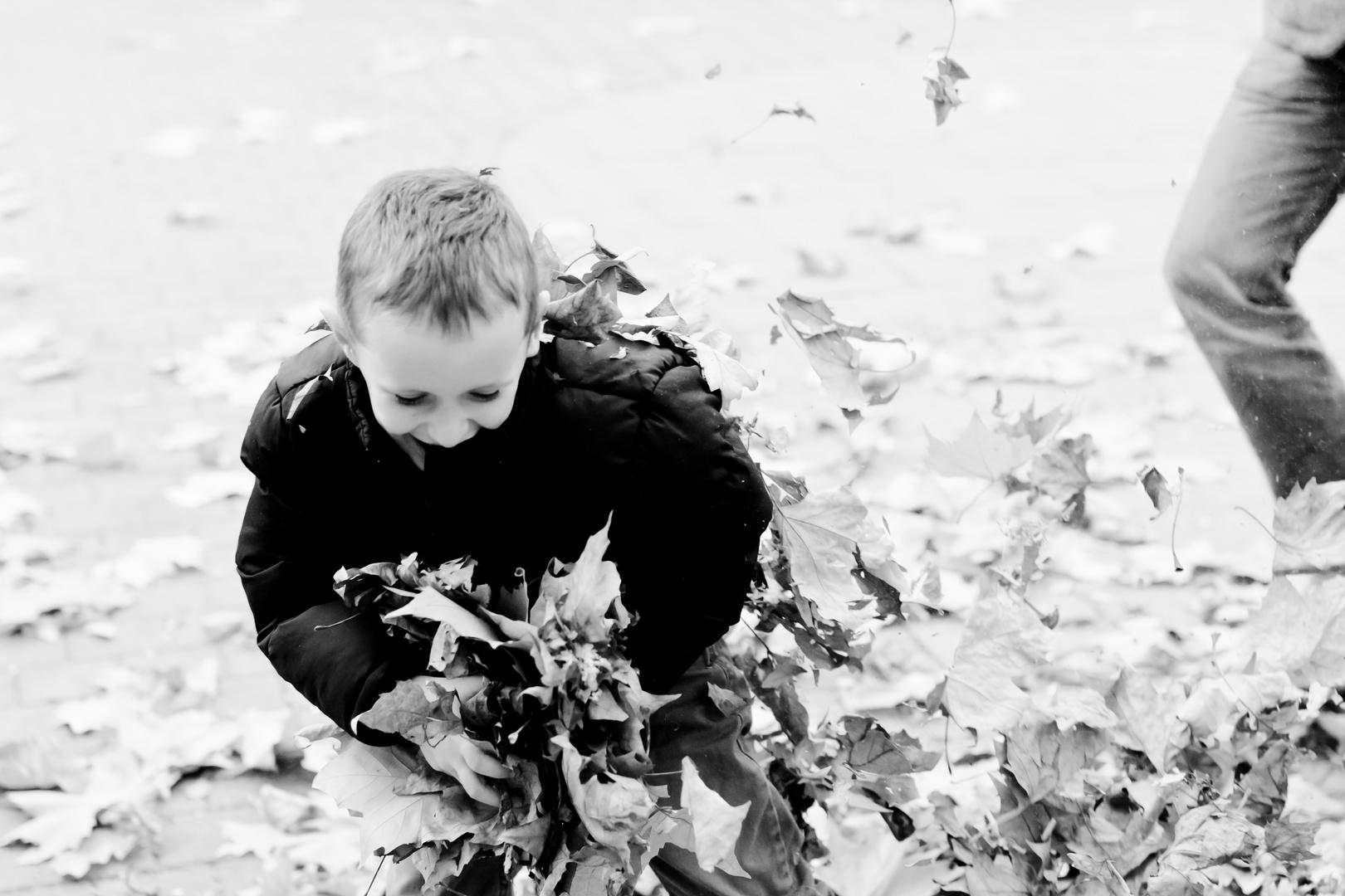 Raphi rafft (Blätter)