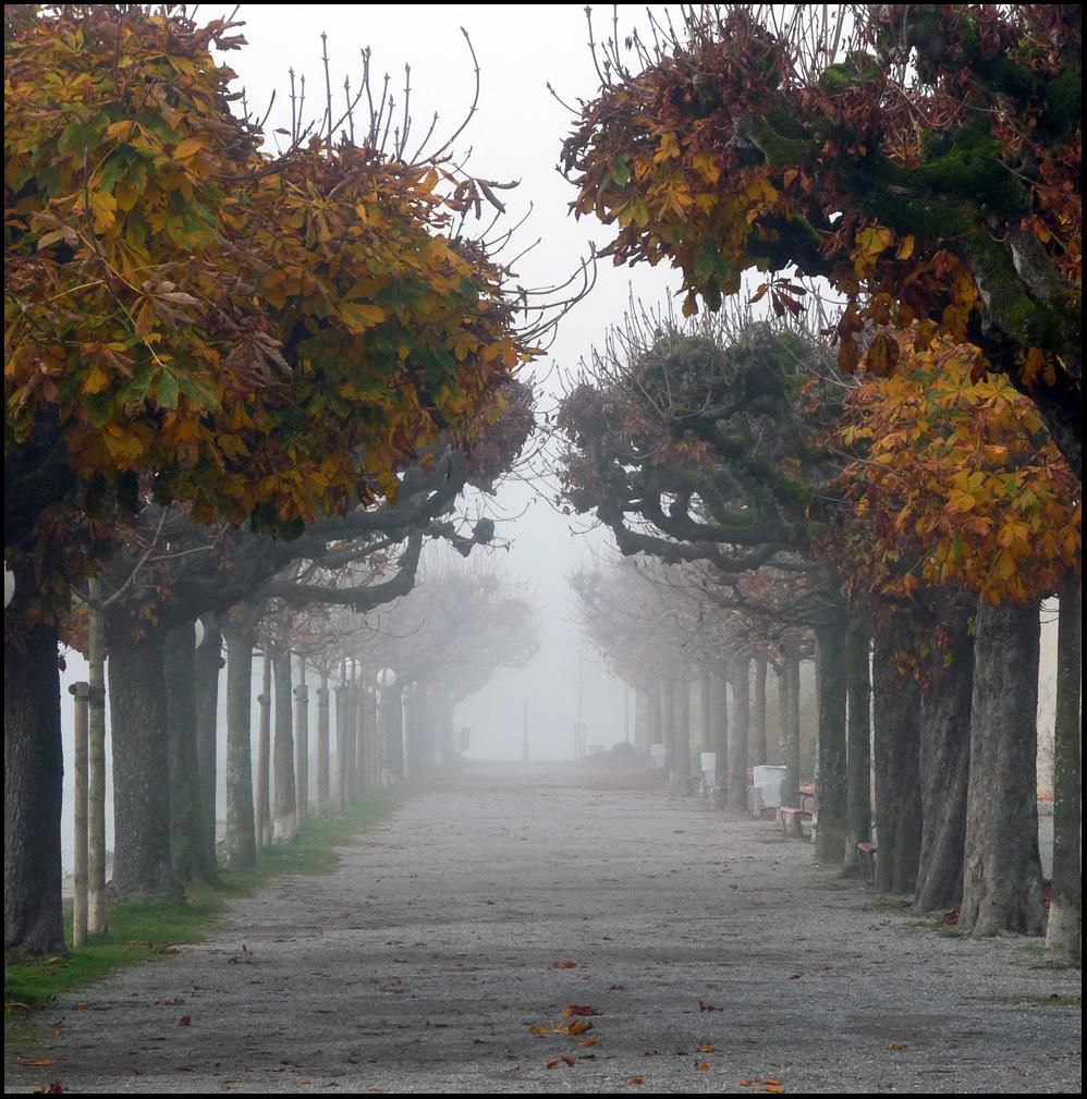 Rapperswil im Nebel