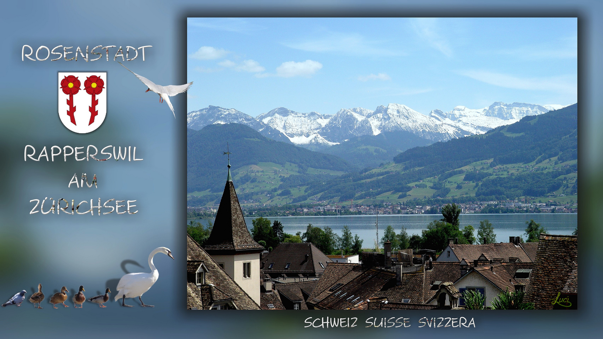 Rapperswil Rosenstadt Am Zürichsee Schweiz