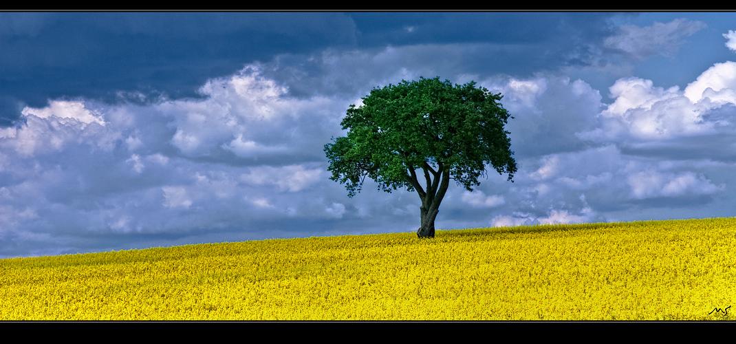 Rapsbaum