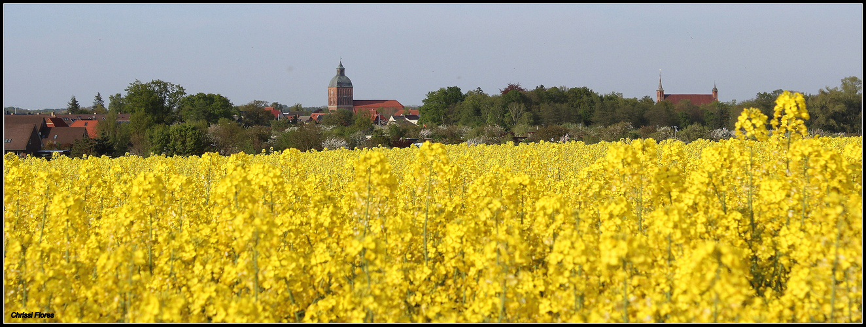 Rapsblüte über Ribnitz