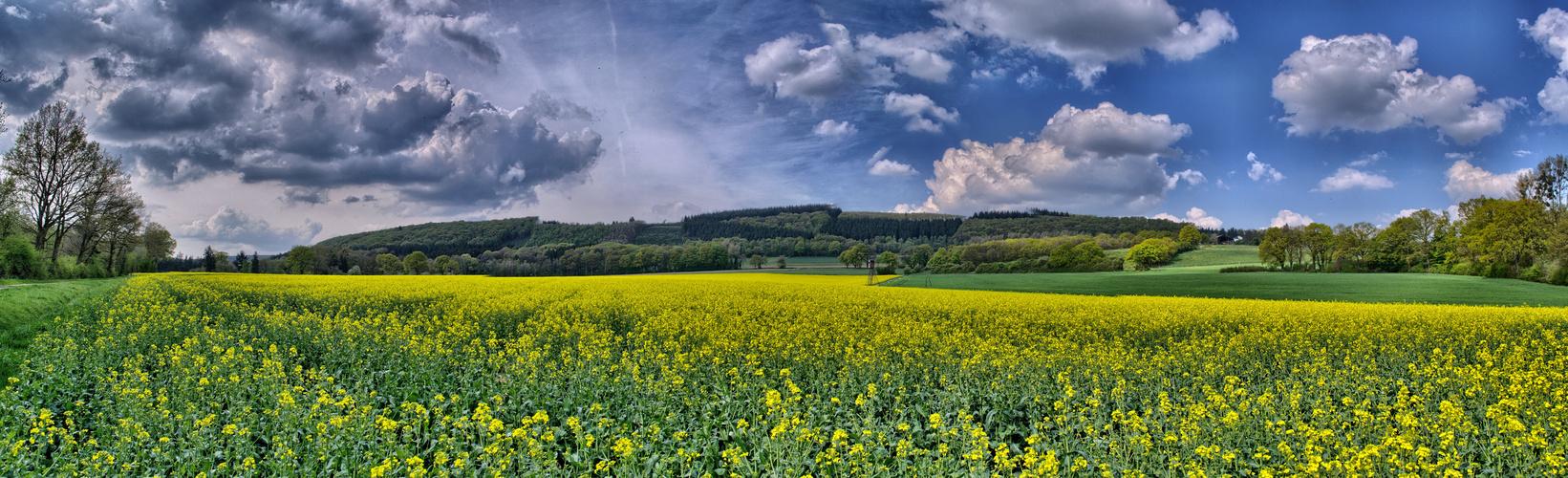 Rapsfeld bei Untermaubach