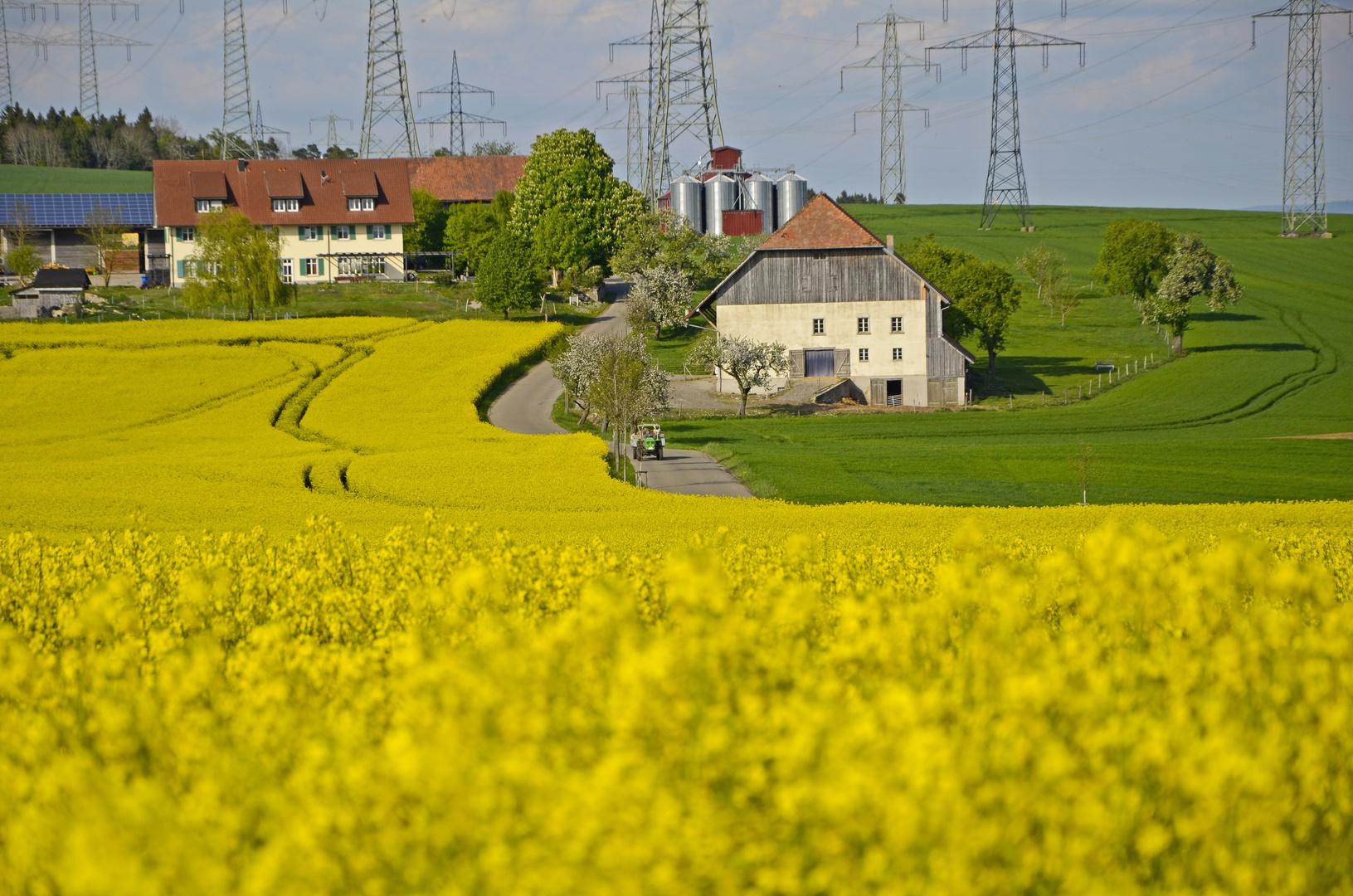 Rapsfeld Berghaus