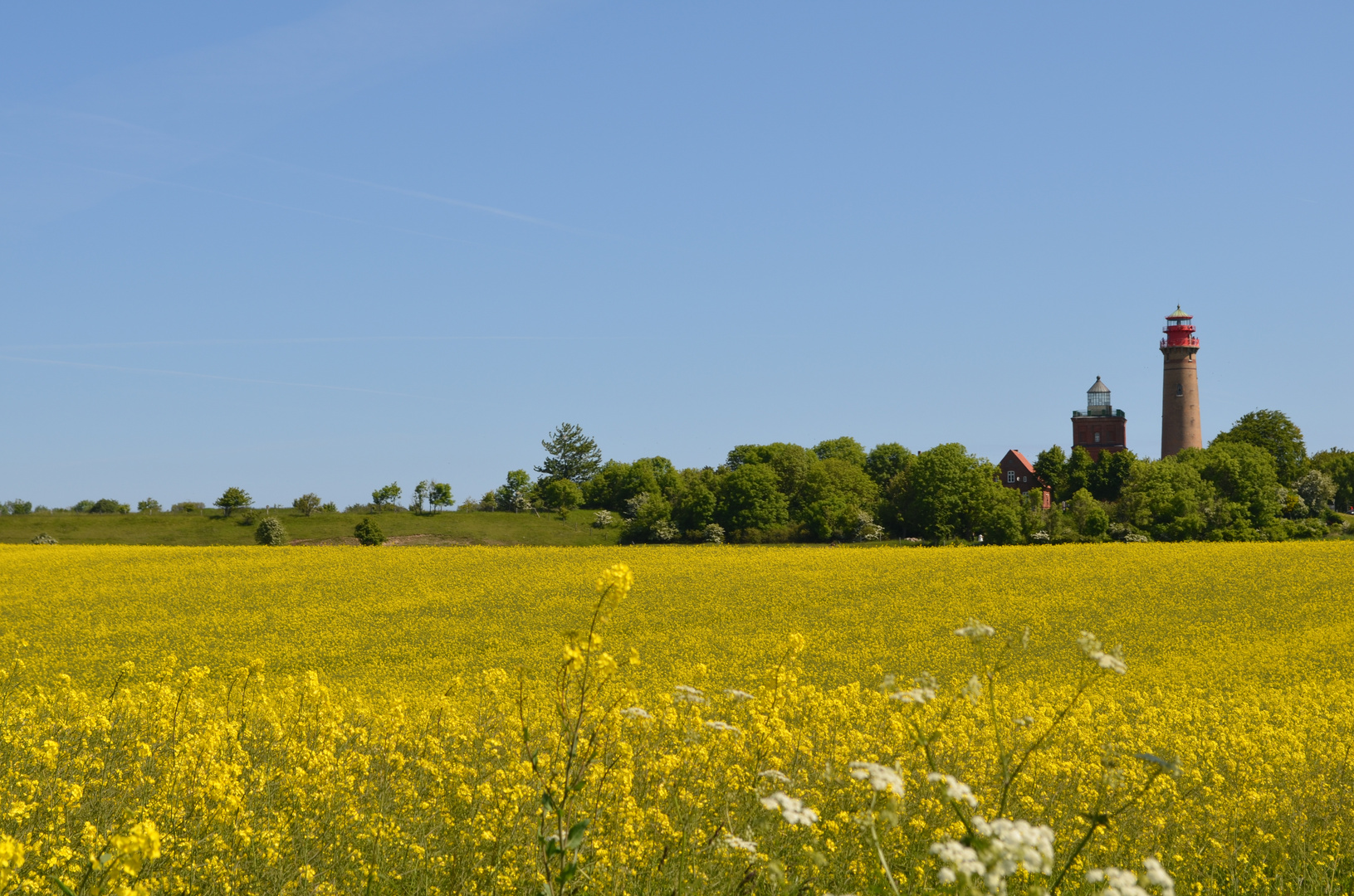Rapsfeld mit Blick auf den Leuchtturm Kap Arkona, Rügen