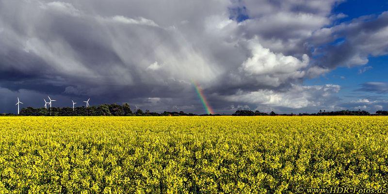 Rapsfeld mit Regenbogenende