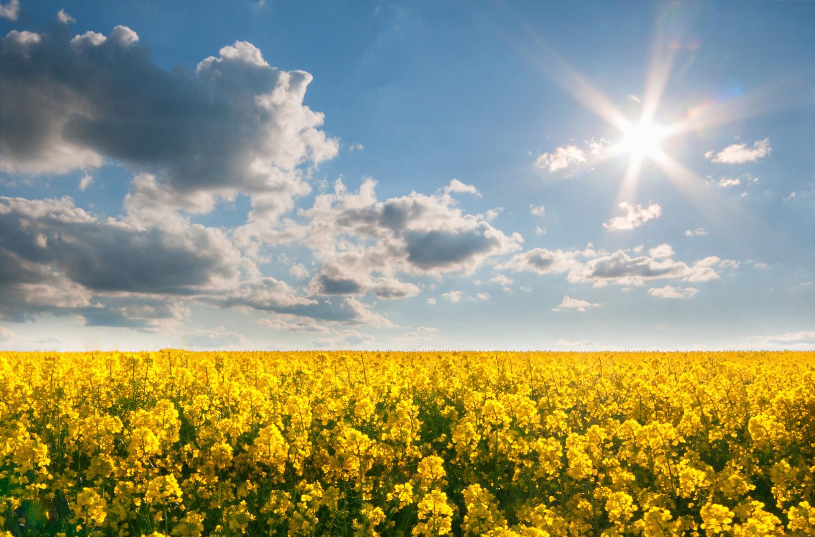 Rapsfeld mit Spannender Wolkenenstimmung